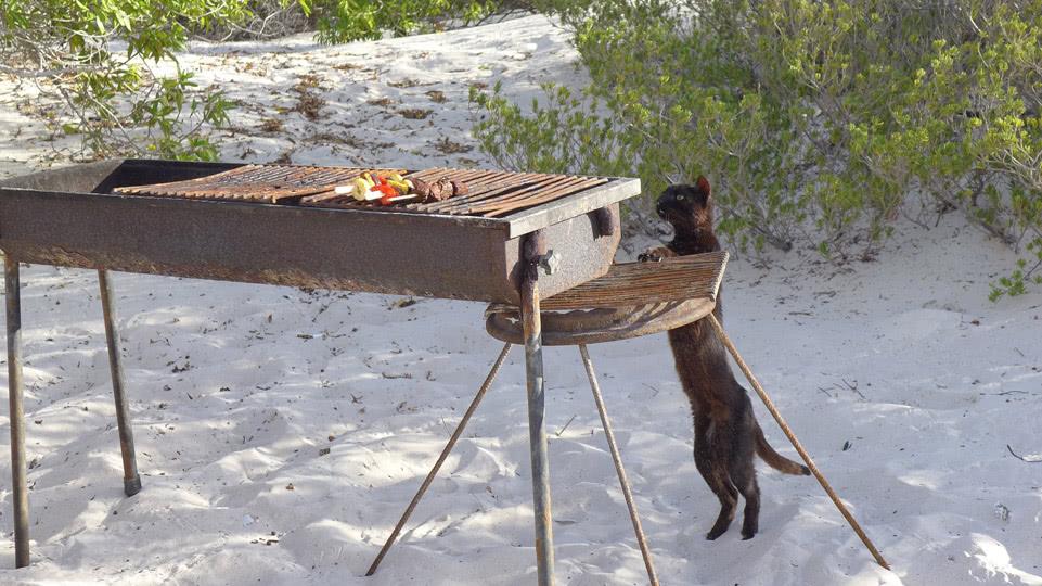 Bonaire-BBQ-Klein-diebische-Katze