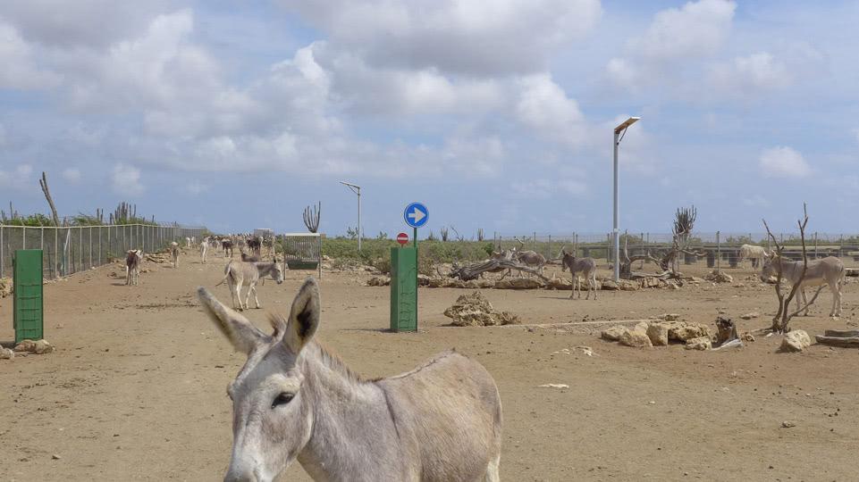 bonaire-donkey-sanctuary-einbahn
