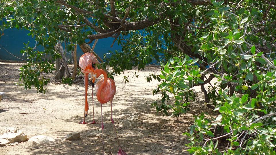 bonaire-donkey-sanctuary-flamingos