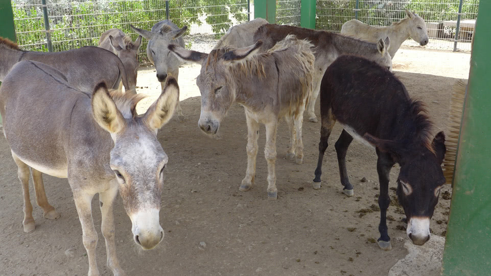 bonaire-donkey-sanctuary-schatten
