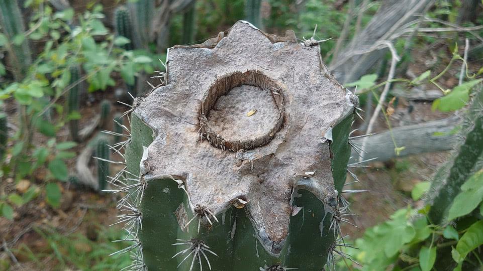bonaire-hiking-DP-kaktus-innen