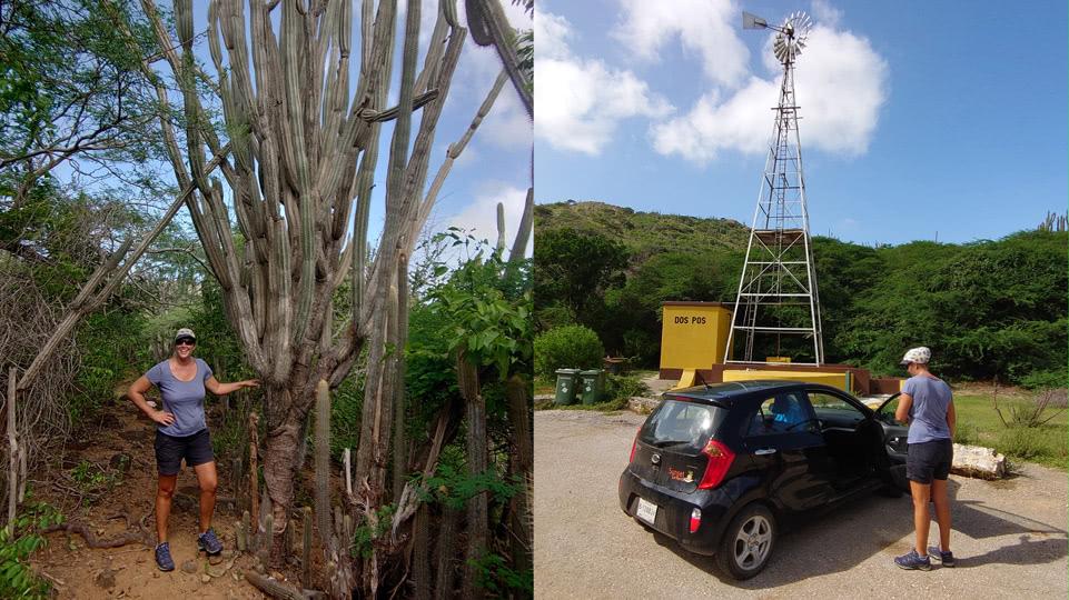 bonaire-hiking-DP-kaktus-parkplatz