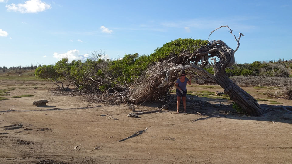 bonaire-mietauto-tag-1-longest-tree
