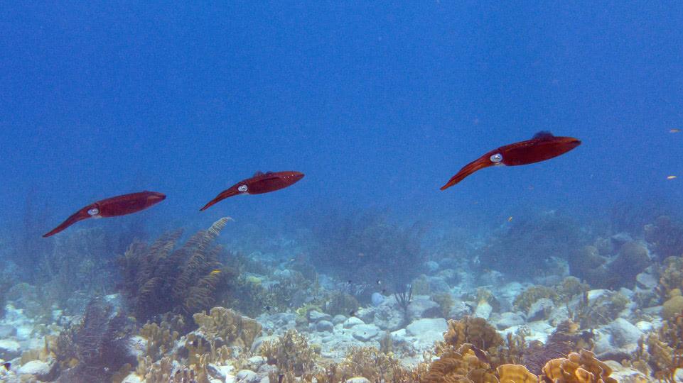 bonaire-mietauto-tag-1-squids