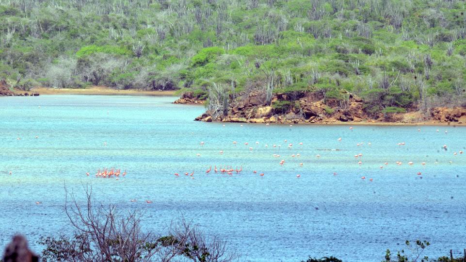 bonaire-nord-flamingos-goto-meer