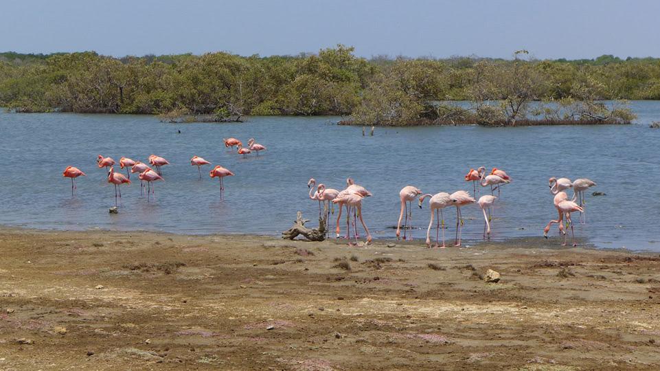 bonaire-sued-mehr-flamingos