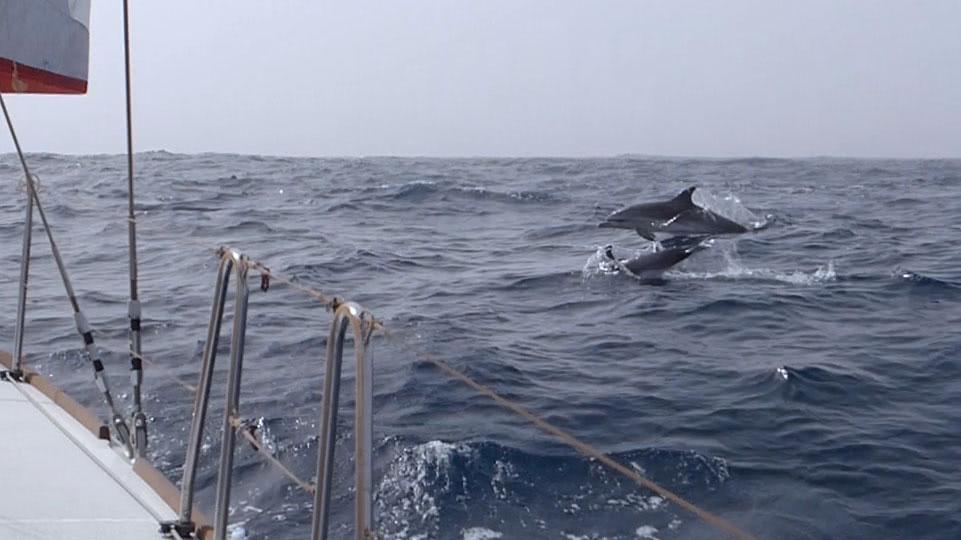 delfin-jump-atlantik-2020
