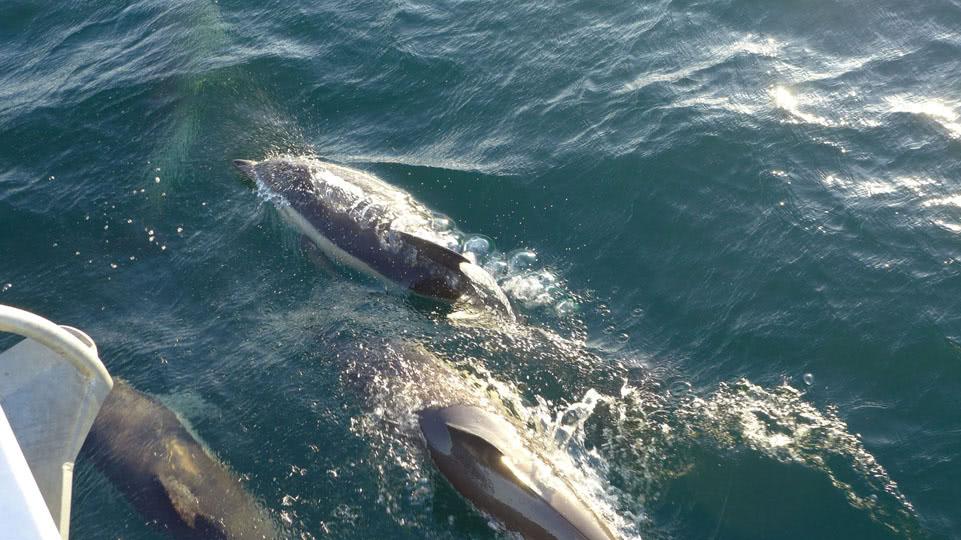 porto-cascais-delphine