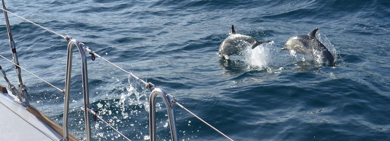 delfine-biskaya